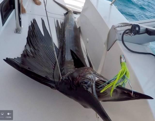 sailfish_rs